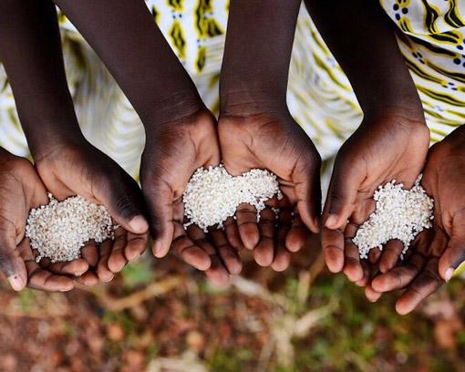 Breedlove Foods Serving Wolrd Hunger - Children's Hands Holding Dry Rice